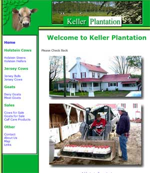 Keller Plantation - Cattle in Tennessee
